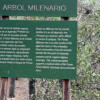 Arbol Milenario Sign at the Bosque de Pómac