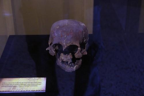 Sacerdotisa skull at the Museo Arqueológico Brüning