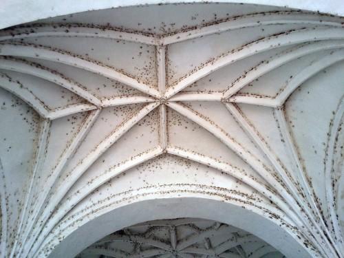 Ceiling Dome at Convento de San Agustín in Zaña