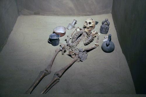 skeletal remains at the Museo Arqueológico Brüning