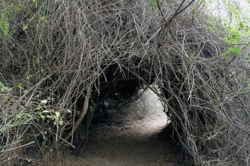 tree tunnel at Chaparrí